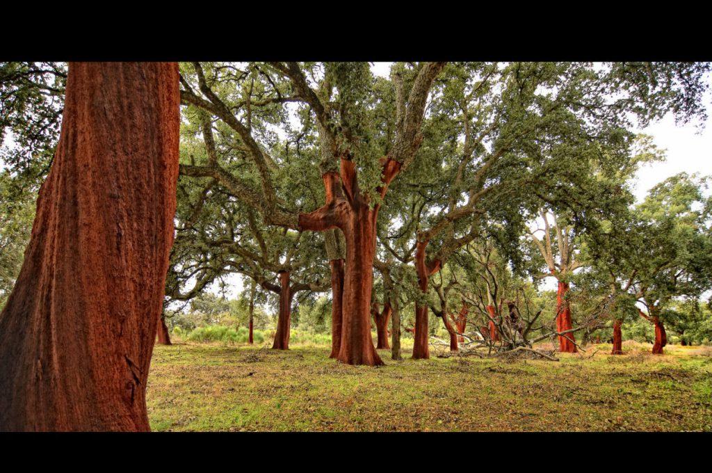Primer Premio Concurso de Fotografía de Naturaleza Red Foresta
