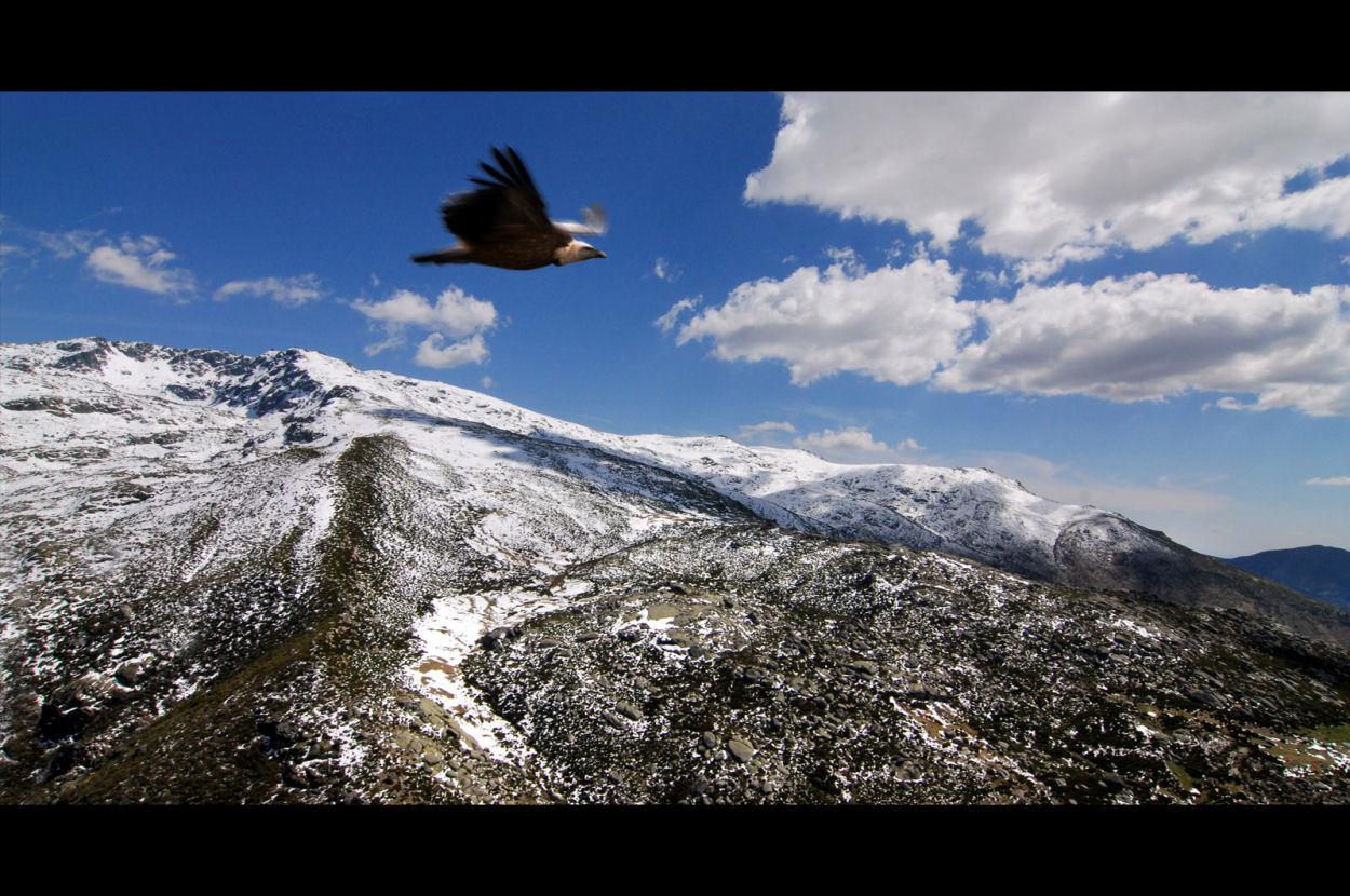 Tercer Premio Reserva de la Bioesfera Sierras de Béjar y Francia 2008